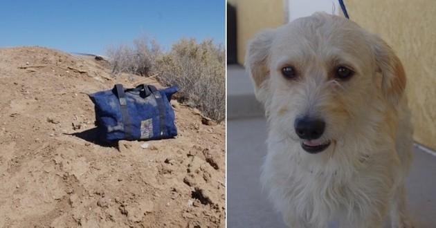 chien abandonné dans une valise