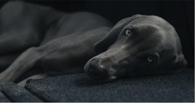 chien scanner vétérinaire