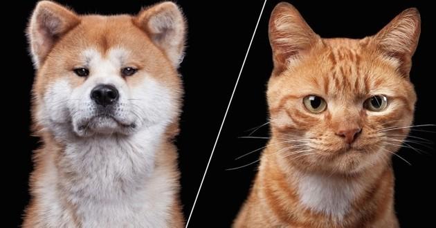Les personnalités de chiens et chats captées par un talentueux photographe