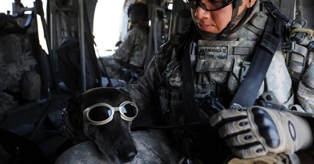 Des chiens pilotes d'avion à l'assaut du ciel pour une émission de télévision
