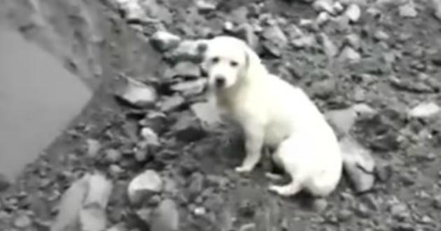 chien triste chine