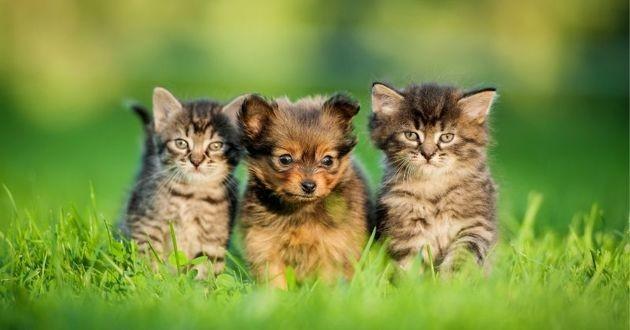 deux chatons et un chiot