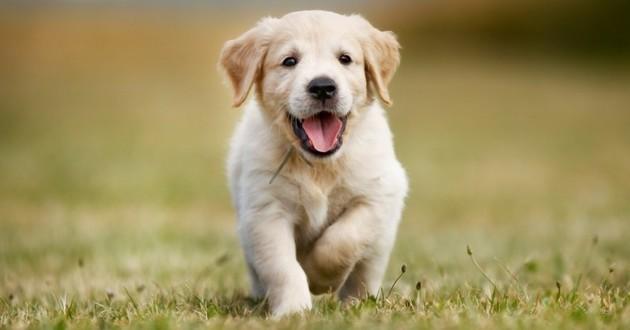 truffe du chien santé