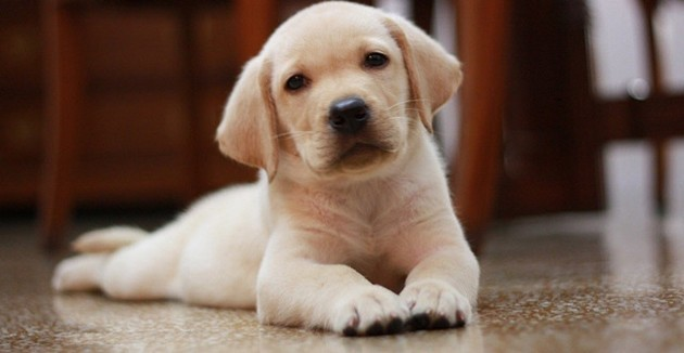 comment prendre soin d 39 un chiot jusqu 39 ses 6 mois entretenir son chien wamiz. Black Bedroom Furniture Sets. Home Design Ideas