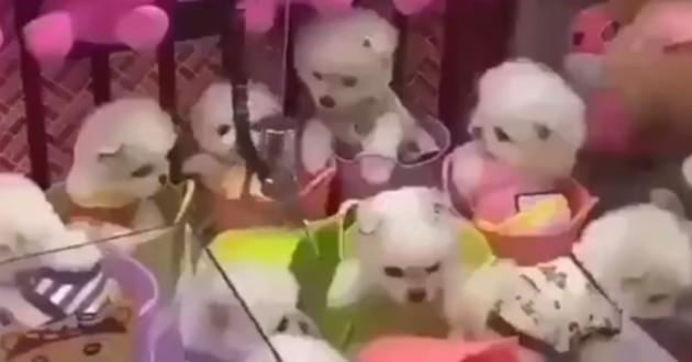 chiot dans jeu arcade