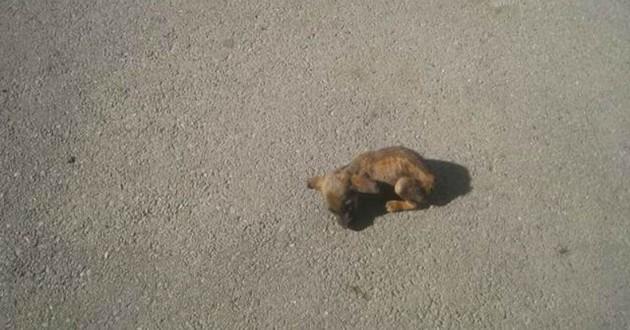 chien rue mort