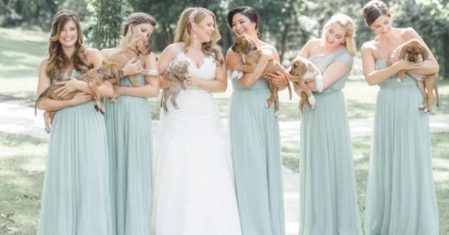chiots aident une mariée