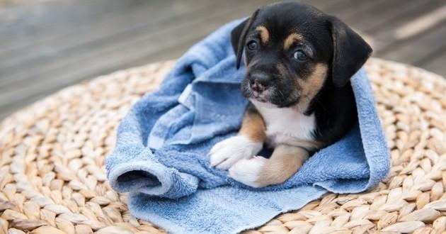 chiots chiens tristes caresses