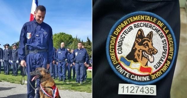 Choc, le chien stups décoré de la médaille d'honneur de la police