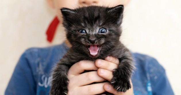 bébé chaton noir