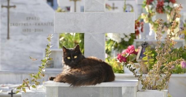 cimetière chat enterrement