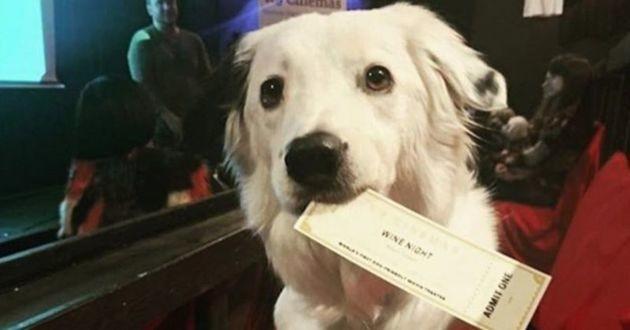 chien avec un billet cinéma