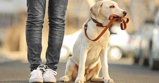 promenade en ville avec son chien