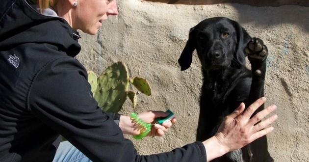 clicker training chien