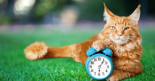 chat horloge