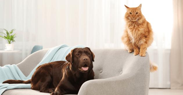 Chien et chat sur un canapé