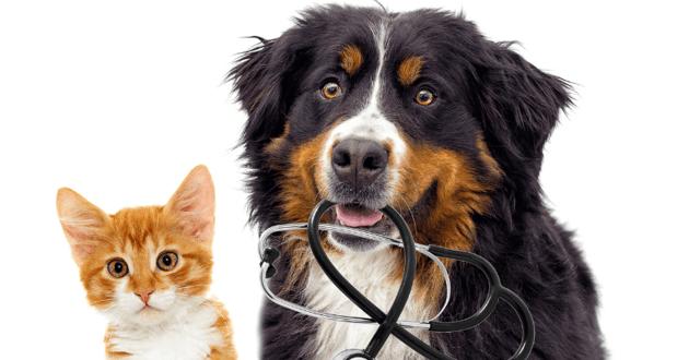 Gros plan sur la tête d'un chat et d'un chien