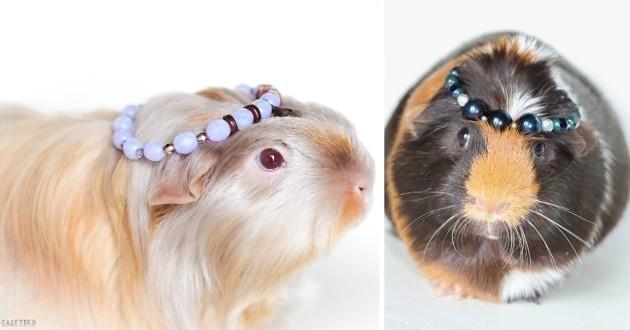 Cochons d'inde qui portent des bijoux