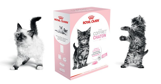 coffret chaton royal canin