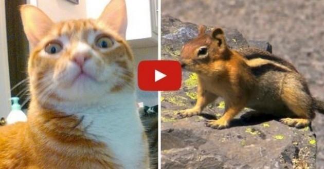 Besoin de capter l'attention de votre chat ? Essayez ça ! (Vidéo du jour)
