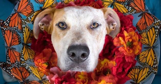 un chien qui porte une collerette décorative