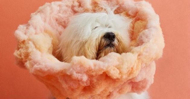 un chien avec une collerette décorative