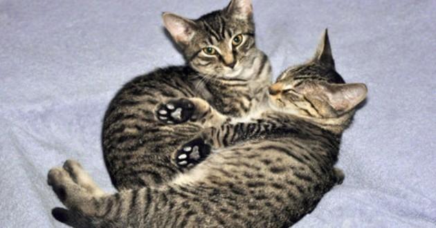 chatons dormir ensemble