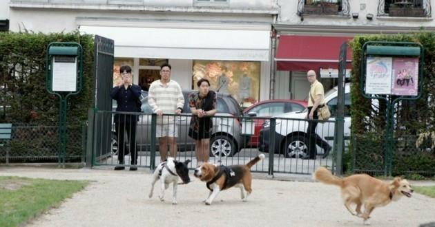 chiens comité oka square 3eme arrondissement paris