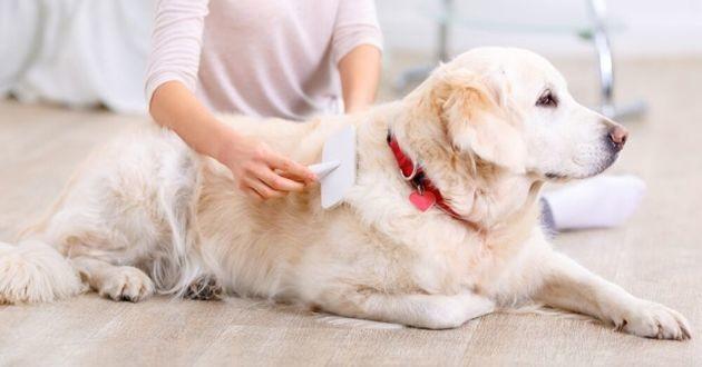 comment bien brosser son chien