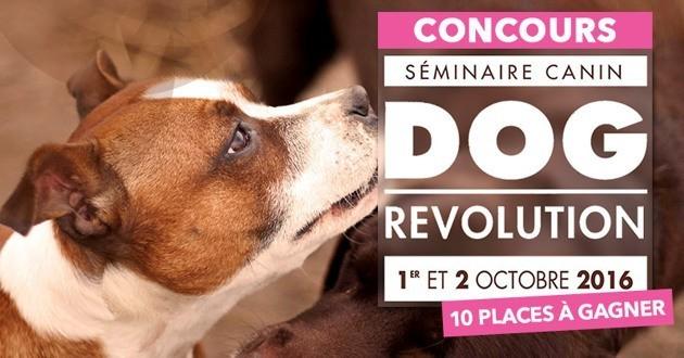 Concours Wamiz Dog Revolution