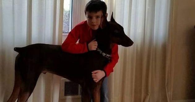 Un Dobermann et son petit maître