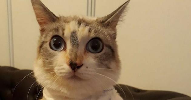 Cookie chatte torturée