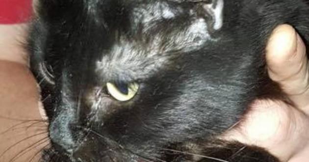 Un chat retrouvé dans un appartement insalubre