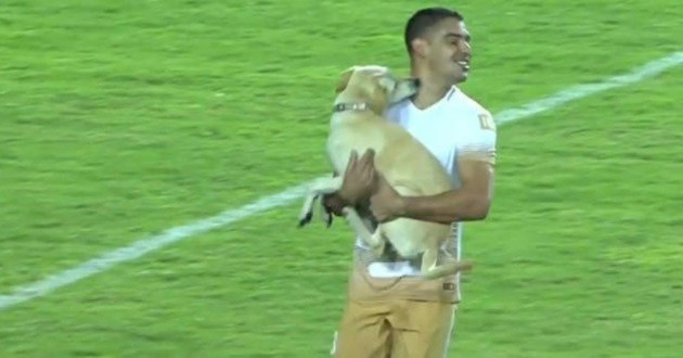 Chien match football Copa Libertadores