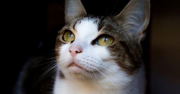 copy cat, chat cloné