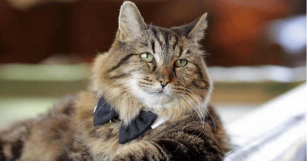 A 26 ans, Corduroy est le chat le plus âgé du monde !