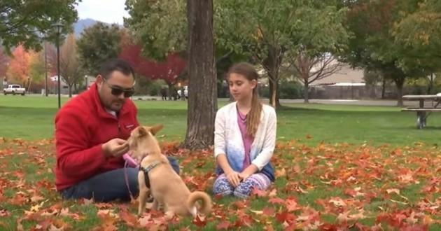 adoption chien corée