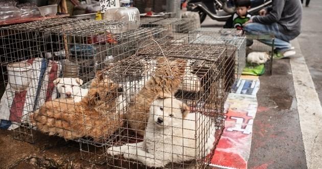 chiens à viande dans une cage