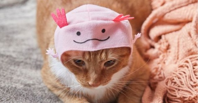 chat avec un petit bonnet