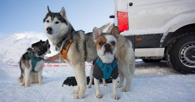 chiens de course