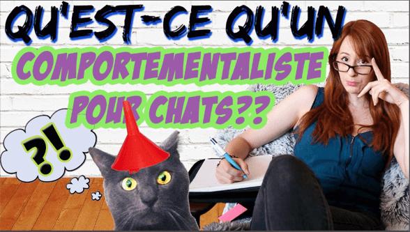 comportementaliste chats