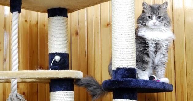 chat jeu arbre à chat