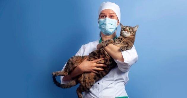 chat avec un vétérinaire masqué coronavirus