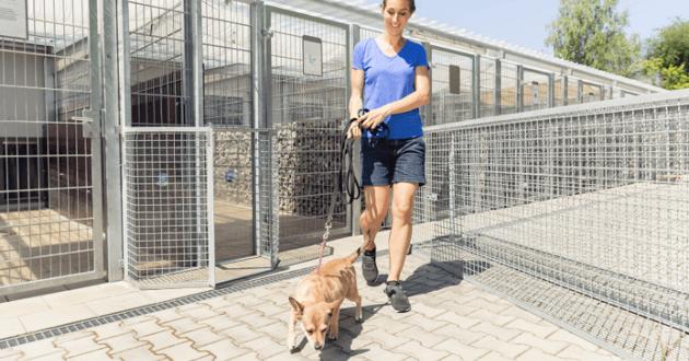 femme et chien dans un refuge