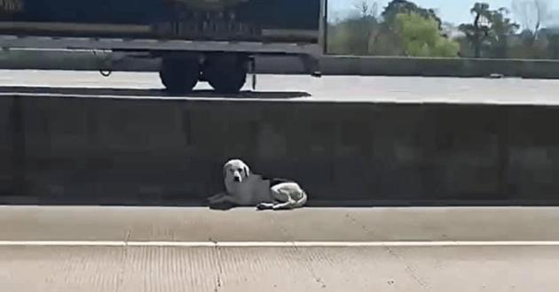 Crash, le chien, couché sur le bas-côté de l'autoroute