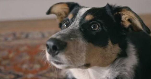 chien vidéo creapills quitline