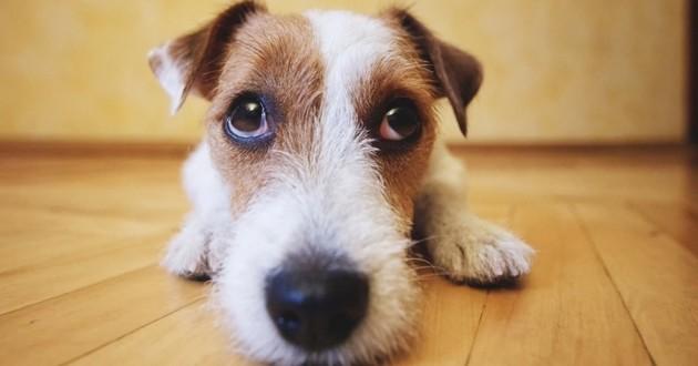chien air triste coupable