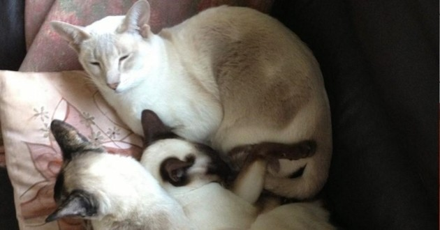Une chatte survit 8 jours coincée à l'intérieur d'un colis