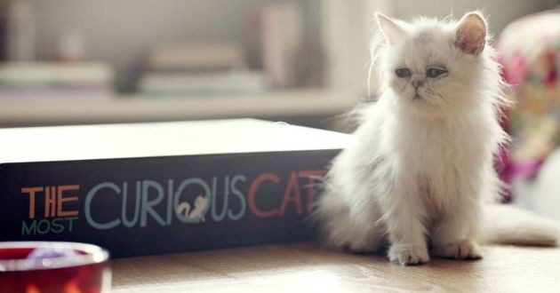 The Curious Cat Book by Whiskas