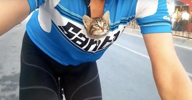 chaton sauvé cycliste